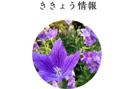 promo_kikyou